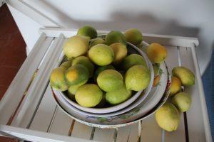 Citrons sicilens - Etna