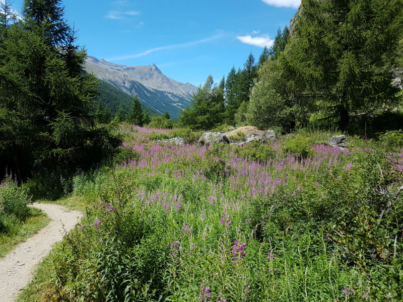 Grand Paradiso, le plus ancien parc national italien