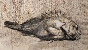 Rascasse de Vincenzo Gemito, encre sur papier parchemin